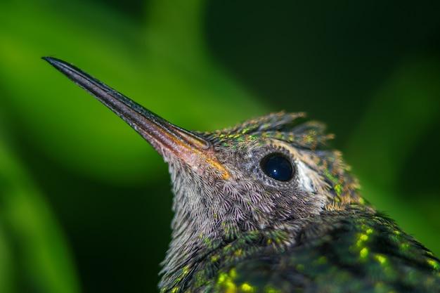 Nahaufnahme eines kolibri, der auf einem ast auf einem verschwommenen thront
