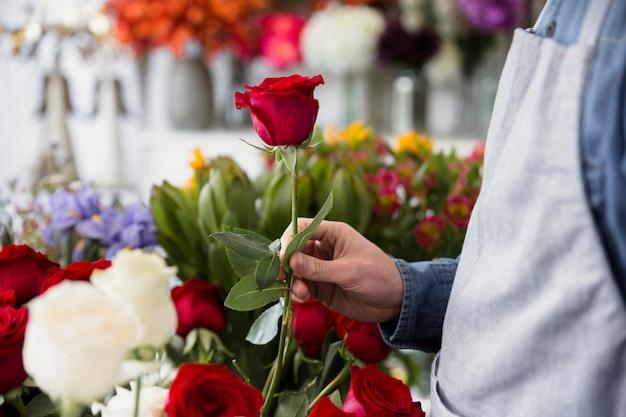 Nahaufnahme eines männlichen floristen, der in der hand rotrose hält