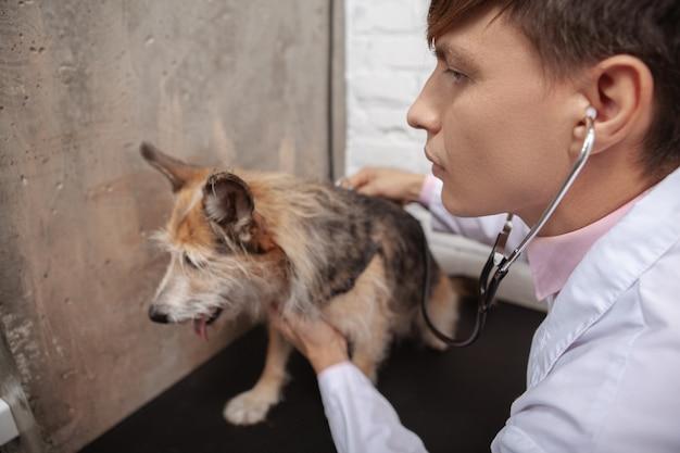 Nahaufnahme eines männlichen tierarztes unter verwendung des stethoskops, der mischlingsschutzhund in seiner klinik untersucht