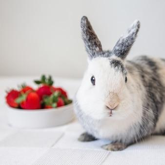 Nahaufnahme eines niedlichen kaninchens
