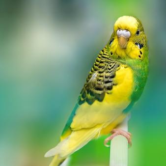 Nahaufnahme eines papageien auf einer eidechse