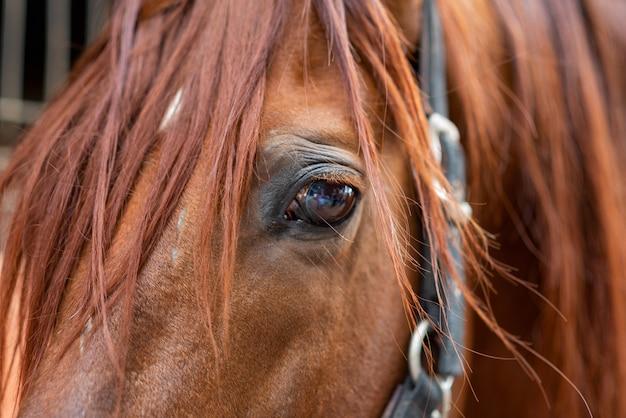 Nahaufnahme eines pferdes