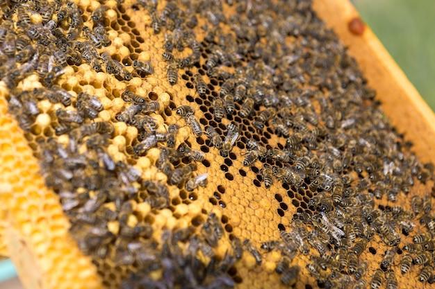Nahaufnahme eines rahmens mit einer wachswabe aus honig mit bienen darauf.