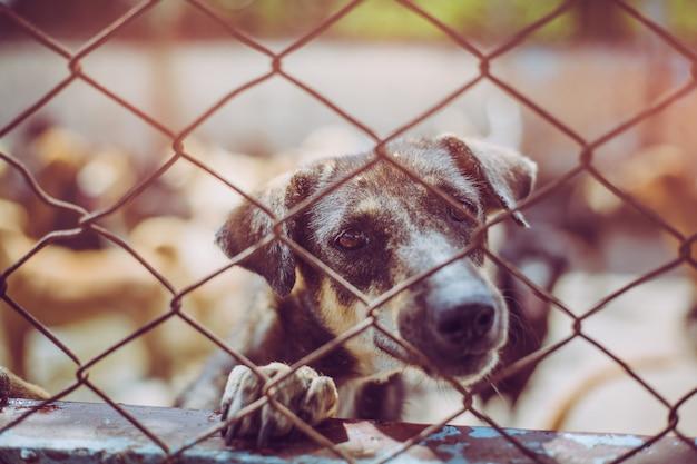 Nahaufnahme eines streunenden hundes. verlassener obdachloser streunender hund liegt in der grundlage.
