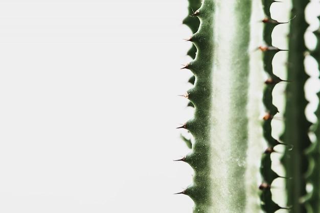 Nahaufnahme eines succulent gegen hellgrauen hintergrund