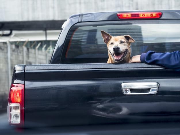 Nahaufnahme eines süßen hundes auf schwarzem pick-up-truck