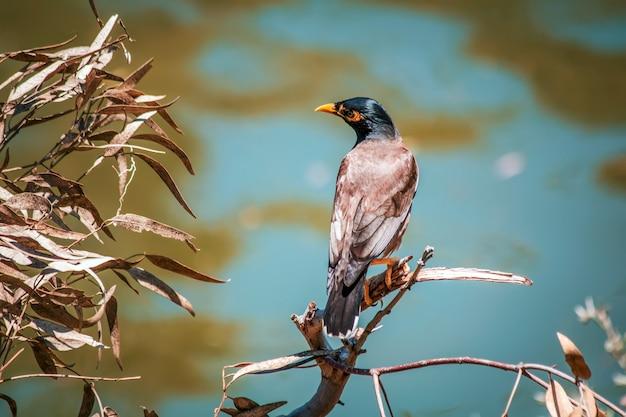 Nahaufnahme eines vogels, der auf einem zweig thront
