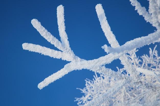 Nahaufnahme frostige zweige der winterbäume gegen den blauen himmel. winterhintergrund