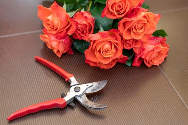 Nahaufnahme gartenschere mit eleganten roten rosen