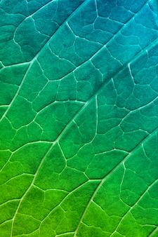 Nahaufnahme getöntes grün-blaues blatt einer pflanze mit adern. natürlicher hintergrund
