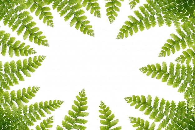 Nahaufnahme, grüne farnblätter lokalisierten weißen hintergrund.