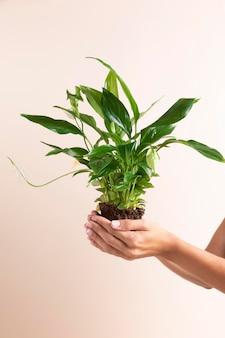 Nahaufnahme hände halten pflanze