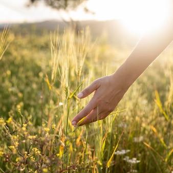 Nahaufnahme hand, die natur berührt