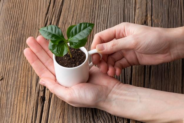 Nahaufnahme hand, die tasse mit pflanze hält
