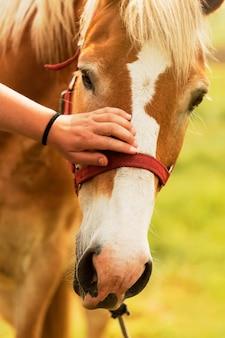 Nahaufnahme hand streichelt pferd
