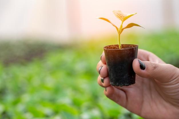 Nahaufnahme landwirte kümmern sich um pflanzliche hydroponische bio-anpflanzung.