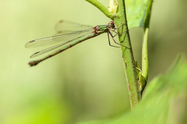 Nahaufnahme libelle auf einer grünen pflanze