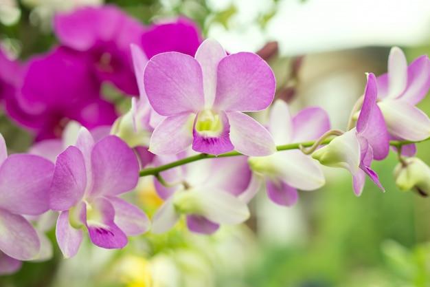 Nahaufnahme lila orchidee blume