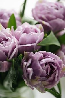 Nahaufnahme lila tulpen