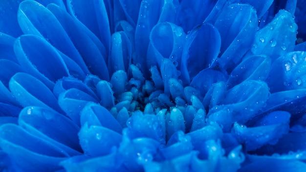 Nahaufnahme nasse blaue blütenblätter