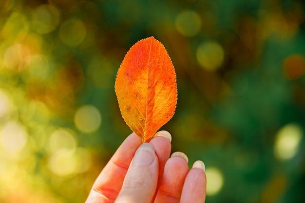Nahaufnahme natürliche herbstfallansichtsfrauenhände, die rotes orange blatt auf dunklem parkhintergrund halten. inspirierende natur-oktober- oder september-tapete. wechsel der jahreszeiten-konzept.