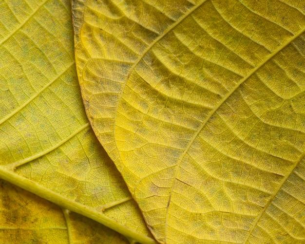 Nahaufnahme nerven des gelben blattes