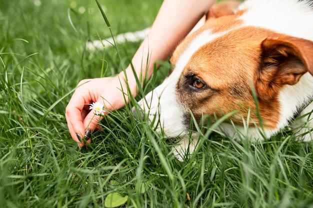 Nahaufnahme niedlicher hund, der zeit draußen genießt