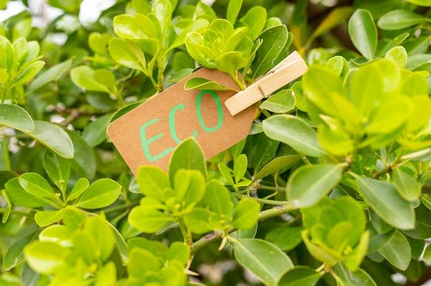 Nahaufnahme-öko-zeichen in blättern