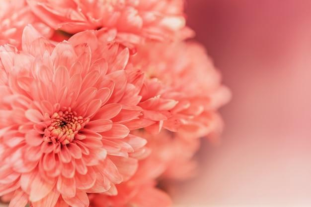 Nahaufnahme rosa blume