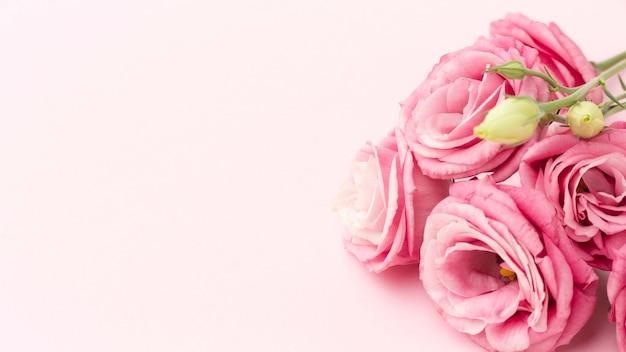 Nahaufnahme rosa rosen mit kopierraum