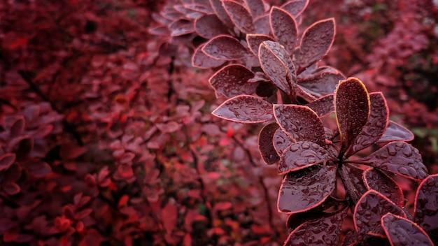 Nahaufnahme rote blätter im herbst