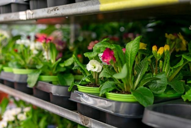 Nahaufnahme sammlung eleganter zimmerpflanzen