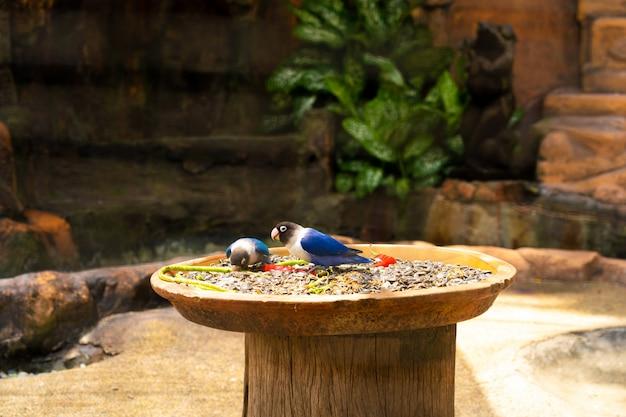 Nahaufnahme schöner farbiger papagei im park, der rote paprika isst. vögel beobachten