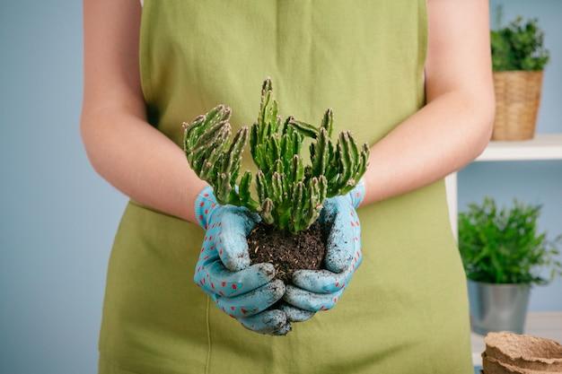 Nahaufnahme schoss von einer frau, die eine grünpflanze in der palme ihrer hand hält. nahansicht