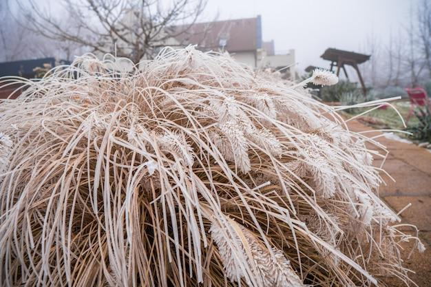 Nahaufnahme schuss von geschnittenem trockenem gras