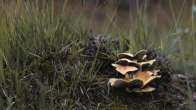 Nahaufnahme schuss von pilzen auf dem boden