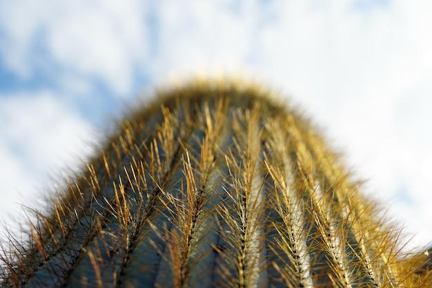 Nahaufnahme selektiver fokusschuss eines kaktus