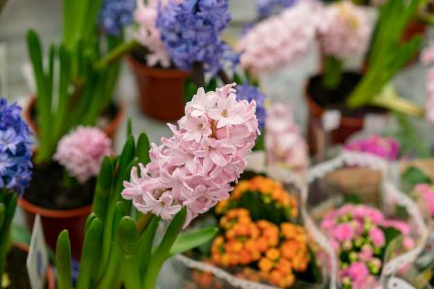 Nahaufnahme sortiment von eleganten zimmerpflanzen