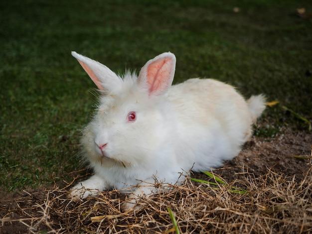 Nahaufnahme süßes nasses zerlumptes weißes kaninchen mit roten augen sitzt auf grünem gras abgelegt, kleiner hase, freundliches haustier
