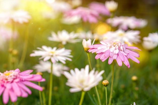 Nahaufnahme und ernte bunte grünlandblumen
