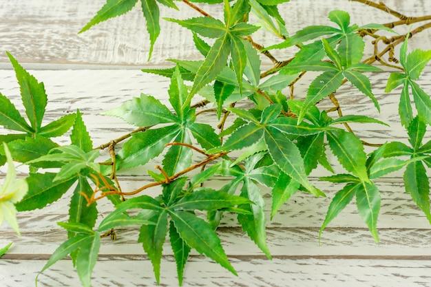 Nahaufnahme vieler grüner blätter eines künstlichen marihuanas, einer heilpflanze mit einer weißen backsteinmauer im hintergrund.