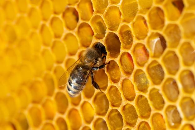 Nahaufnahme von arbeitsbienen auf waben. bild der bienenzucht und honigproduktion