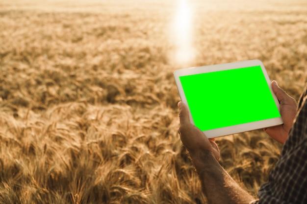 Nahaufnahme von bauernhänden, die tablet mit grünem bildschirm im weizenfeld halten