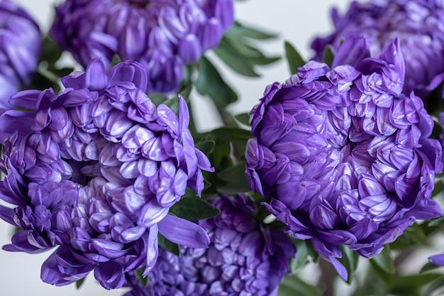 Nahaufnahme von blauen chrysanthemen auf einem unscharfen hintergrund.