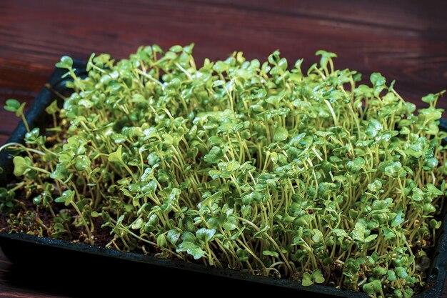 Nahaufnahme von brokkoli-mikrogrün in der box