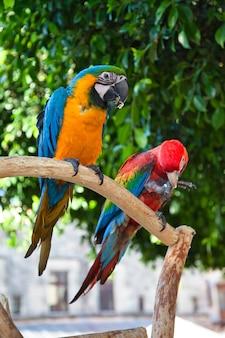 Nahaufnahme von bunten papageien in rhodos, griechenland