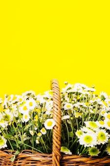 Nahaufnahme von chamomiles blüht im korb auf gelbem hintergrund