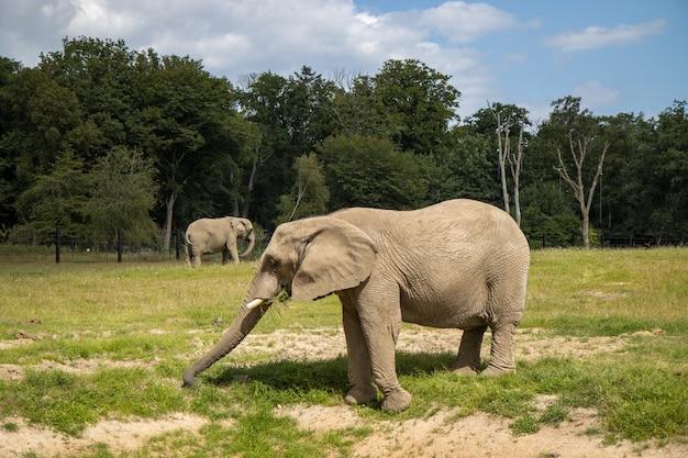 Nahaufnahme von elefanten in der natur mit bäumen auf der oberfläche
