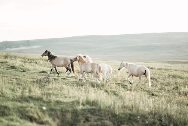 Nahaufnahme von entzückenden ponys, die die wildnis genießen