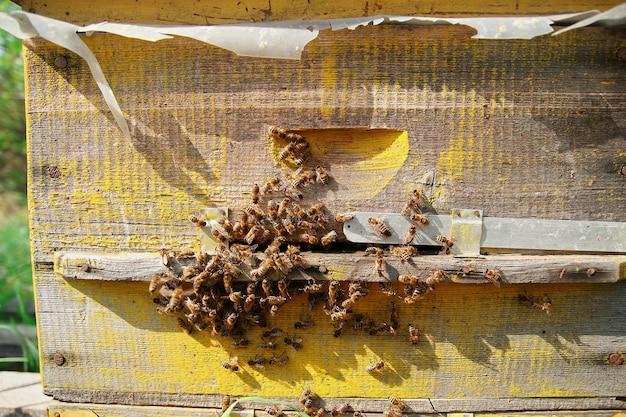 Nahaufnahme von fliegenden bienen. holzbienenstock und bienen. viele bienen am eingang des alten bienenstocks im bienenhaus. arbeitsbienen auf planke. rahmen eines bienenstocks.